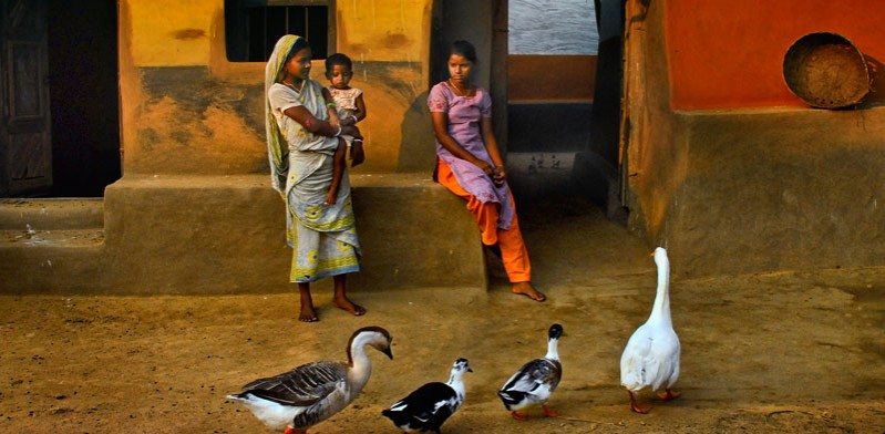 indian street scene with females and ducks