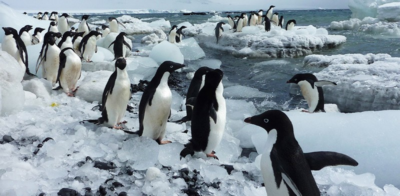 DEC2013_antarctica_penguins-on-ice-Greg-Croft-blog