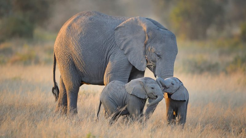 east-africa-travel-guide---diana-robinson-2