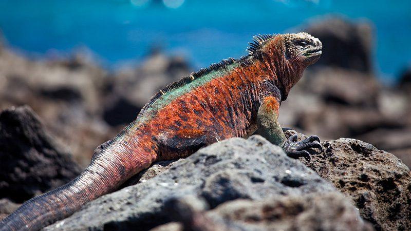 Darwin-Galapagos---Peri-Apex
