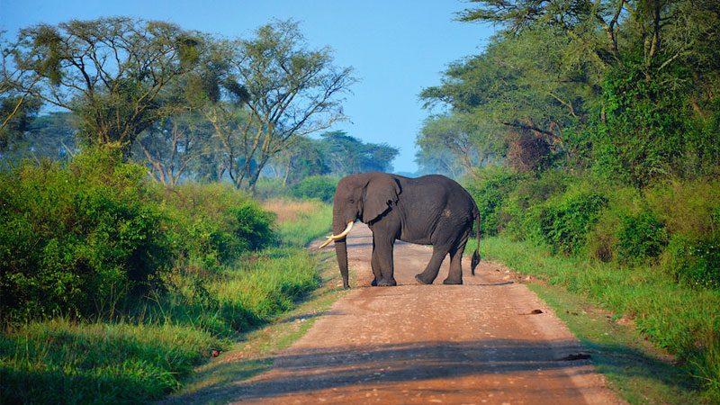 africa-overland---rod-waddington