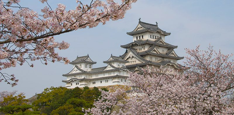 Himeji Castle with Cherry Blossoms in Japan