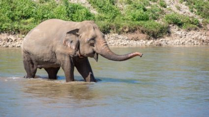 This is why we no longer ride elephants