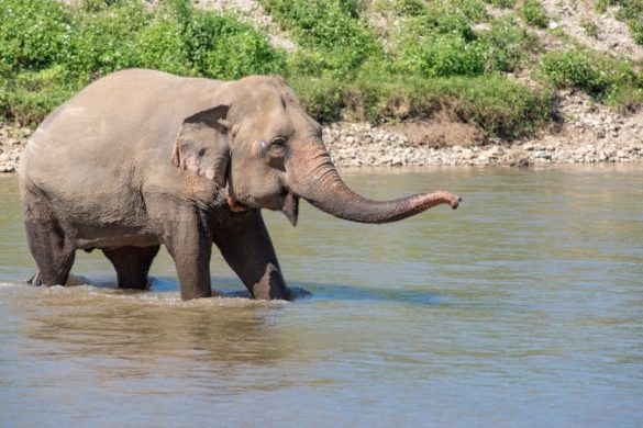 happy elephant in the water