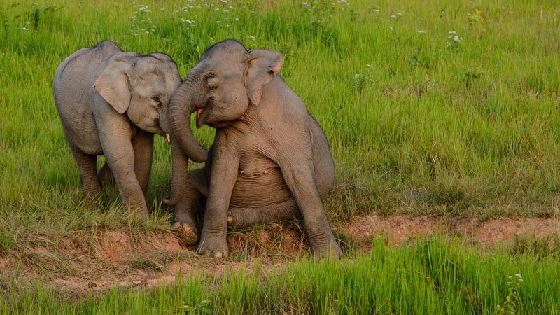 elephants-welfare---tontantravel,-