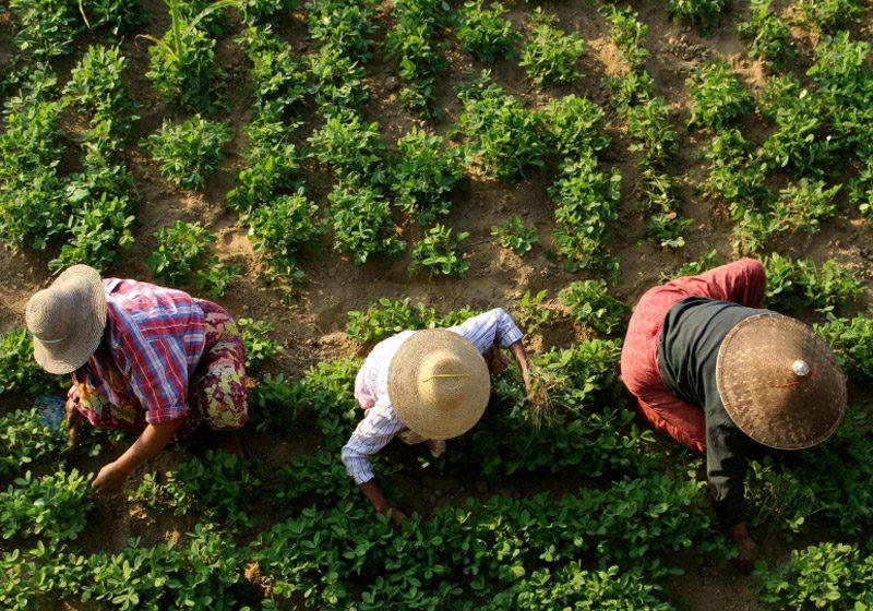 burma_mandalay_three-gardeners-aerial_Sandra-Imstepf