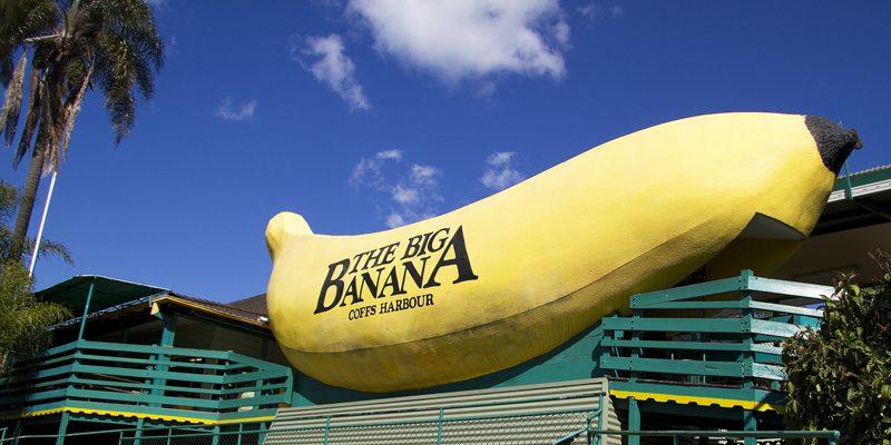 big banana - credit Anna Calvert)