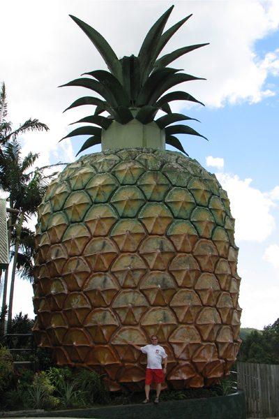 big pineapple - credit Drew Douglas