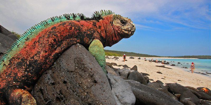 island galapagos - credit blinking idiot