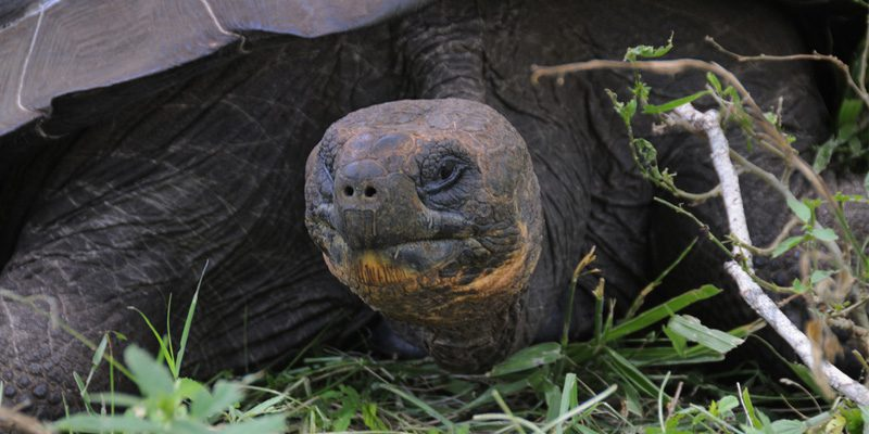 Don't mess with a tortoise. Credit Scott Ableman, Flickr