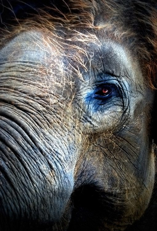unknown_elephant-portrait-closeup_Chad-Cross