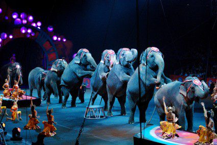 A circus of ethics: is elephant welfare finally becoming mainstream?