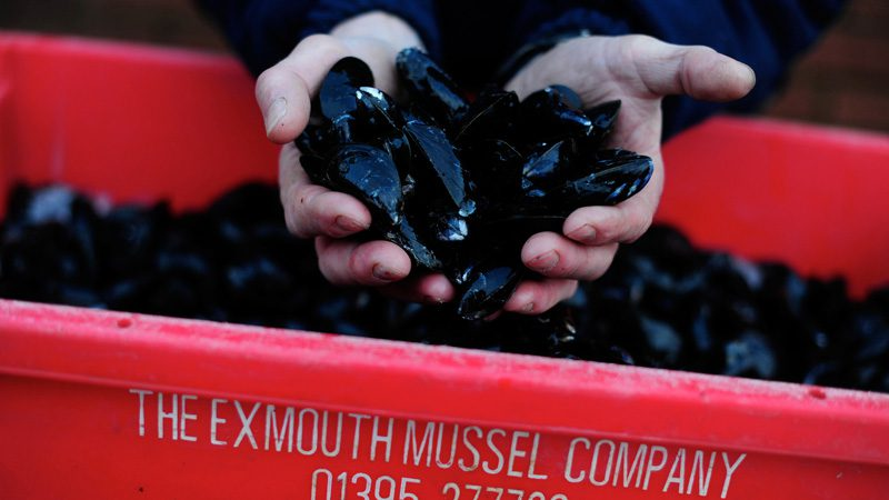 Exmouth mussels. Who's hungry? Image Marine Stewardship Council, Flickr