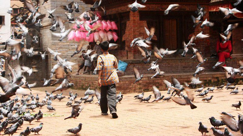 Pigeons fly in Kathmandu's old town. Image Marieke-Haafkes, Flickr