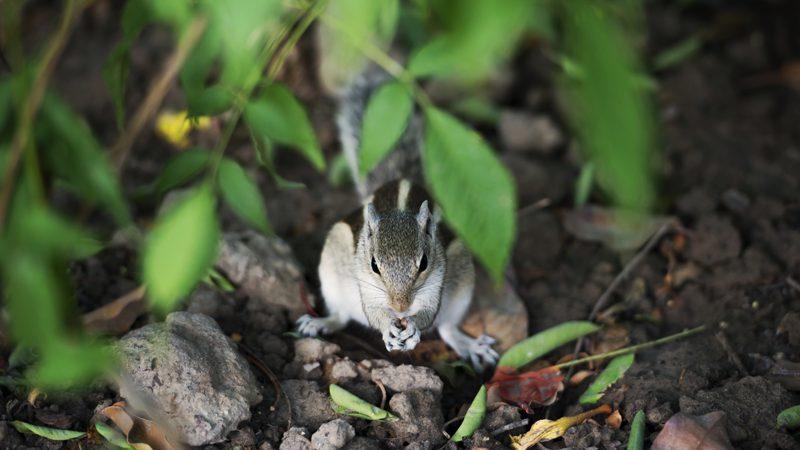 MisterSquirrelHR
