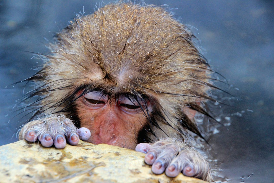blogo-1080_0005_japan_jigokudani_cold-little-monkey