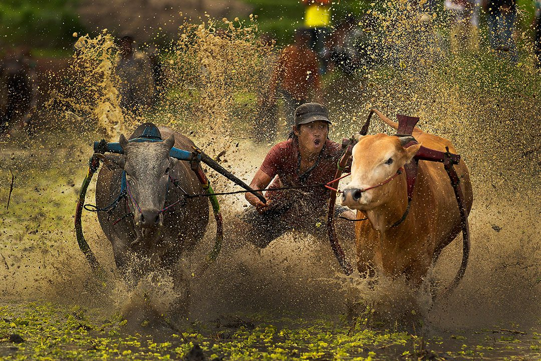 blogo-1080_0008_indonesia_padang_bull-racing