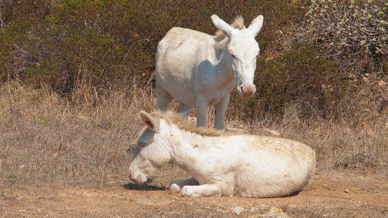 donkey - Aitor Garcia Vinas
