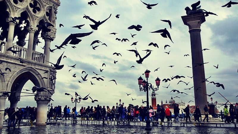 Venice, where even the pigeons are fiercely in dependant. Image Roberto Trombetta, Flickr