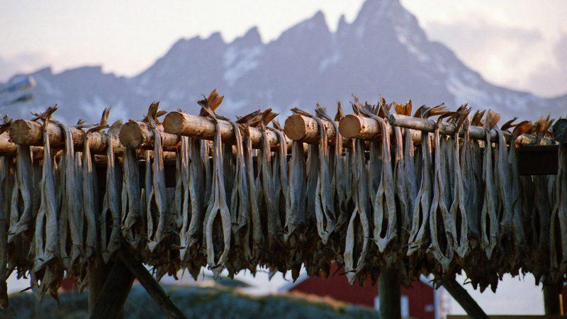 lofoten-islands-stockfish---credit-Ib-Aarmo