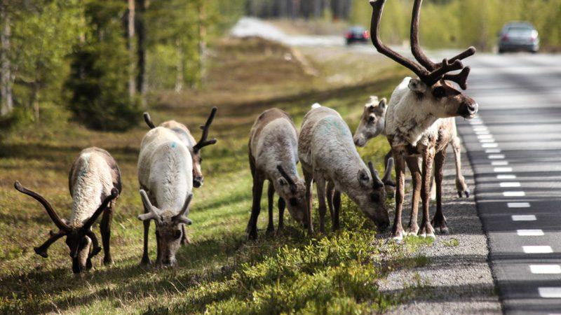 sweden---fancois-morio