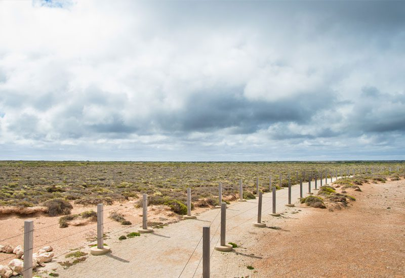 Nullarbor - nullabor