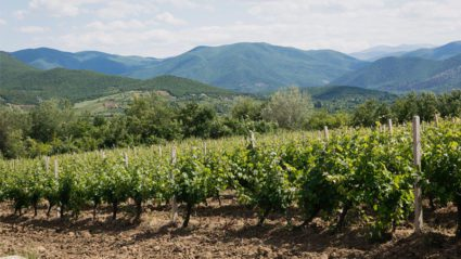 Macedonian wine guide: we chat with the country's leading expert