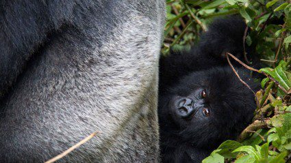 Stories from Rwanda: what it's really like visiting mountain gorillas