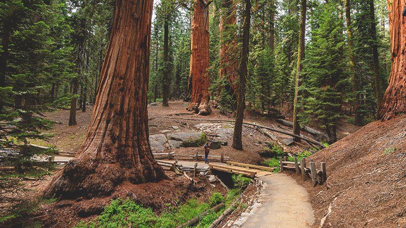 national park usa -sequoia