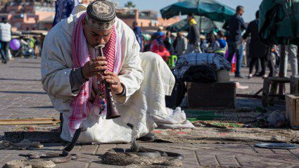 Underbelly: why snake charming in Morocco isn't so cool