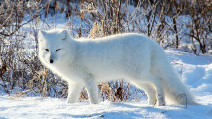Life in the north: our top 6 Arctic wildlife experiences