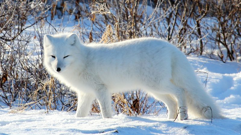 Life In The North Our Top 6 Arctic Wildlife Experiences
