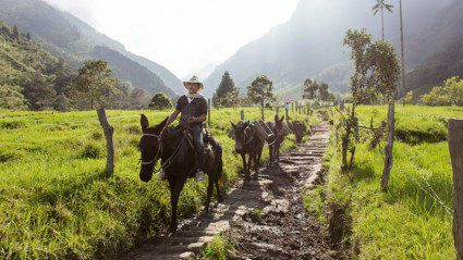 Is Colombia's Cocora Valley the world's coolest natural wonder?