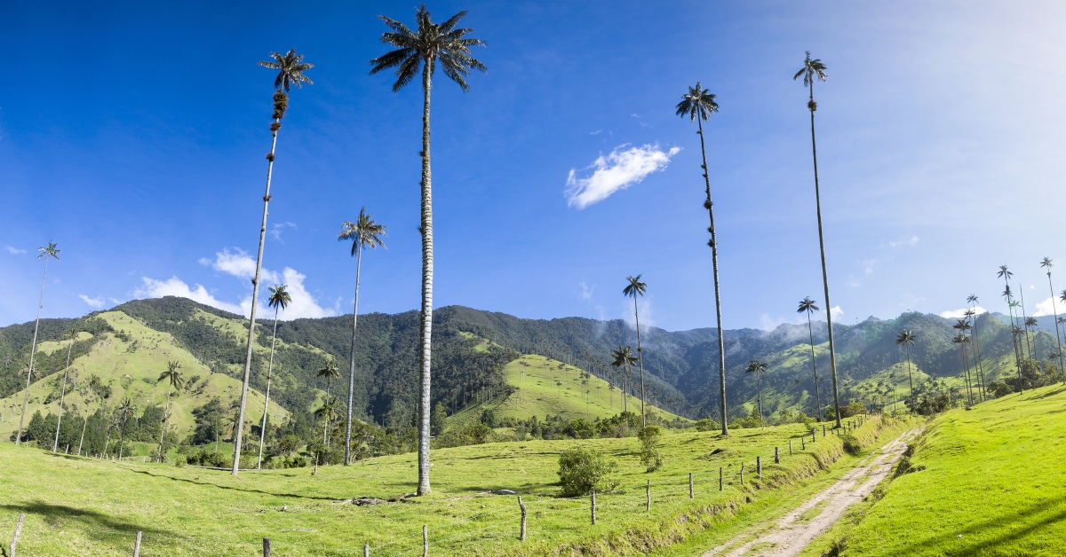 Is Colombia S Cocora Valley The World S Coolest Natural