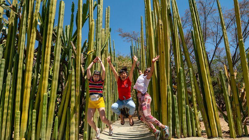 Cactus garden Oaxaca