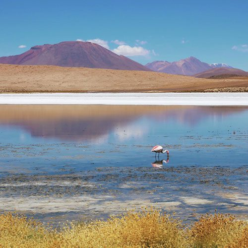Bolivia-altiplano-flamingoes---Tyson-Wheatley