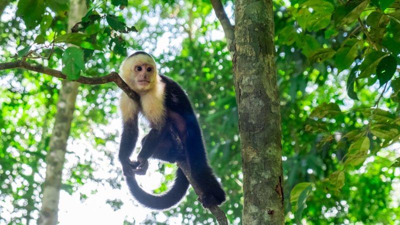 Costa Rica Manuel Antonio sloth