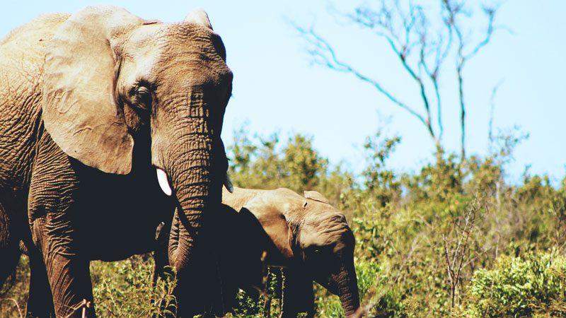 Family travel elephants-in-Africa---Unsplash