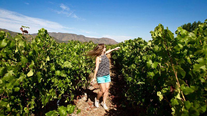 Solo travel, vineyard-in-Chile---Wanderlust-Chloe