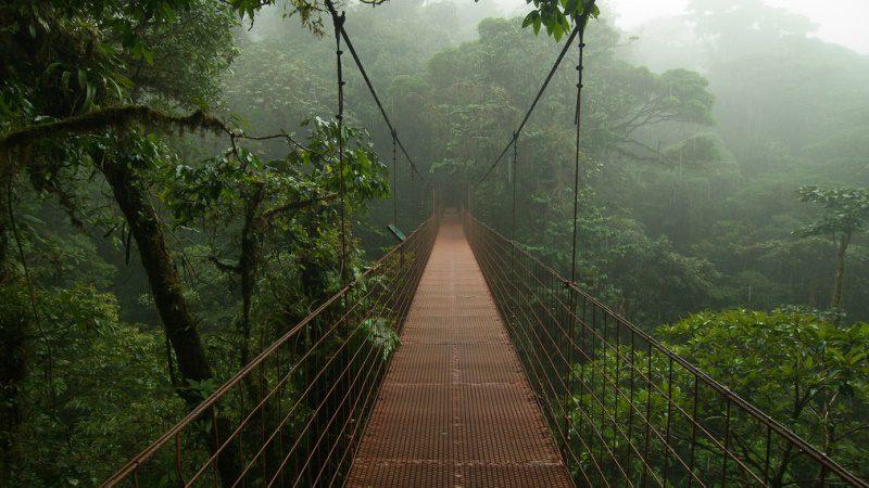 Costa Rica, Monteverde, sloth ----Clifton-Beard