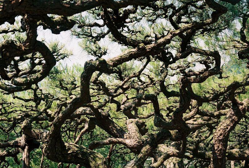 Japan forest on film - Gemma Saunders