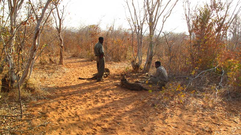 Ethical-animal-tourism,-Mukuni---David-Berger