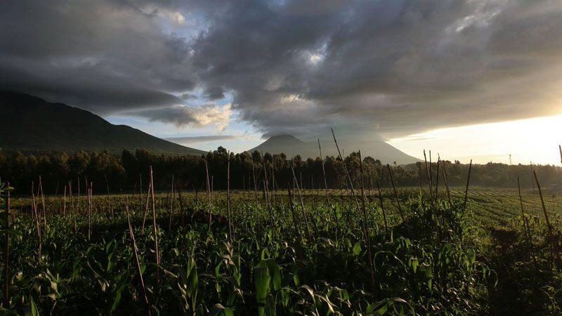 Gorilla-trekking,-Rwanda---Amanda-Linardon