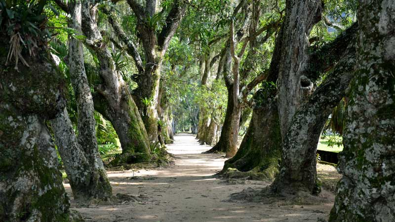 Rio-travel-guide,-Botanical-Gardens---Rodrigo-Soldon