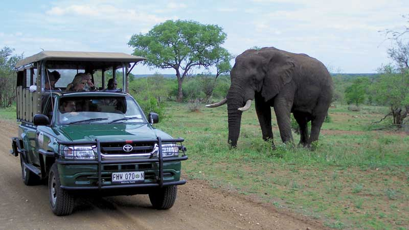 Intrepid-South-Africa-safari