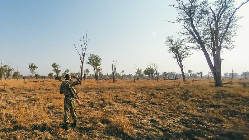 south-luangwa-guard-common-wanderer