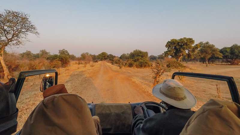 south-luangwa-safari-common-wanderer