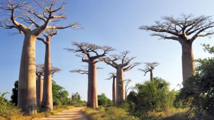 Lost World: Madagascar as you've never seen it before