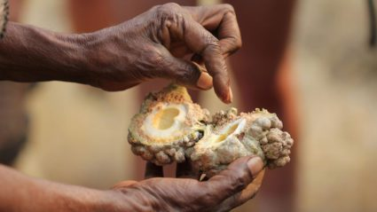 Can I eat that? A rough guide to Aussie bush tucker