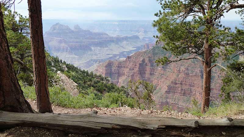 grand-canyon-trees-ashlea-wheeler